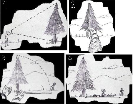 Altura del árbol