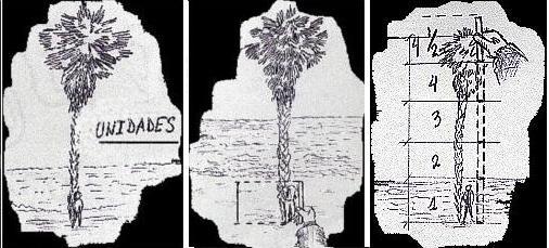 Altura del árbol2