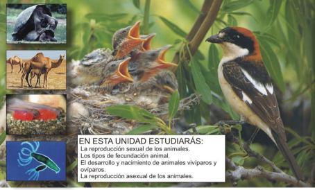 reproducción animales
